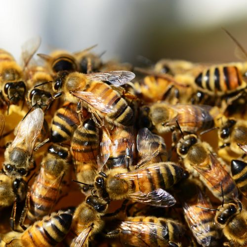 Beekeepers can help save our planet